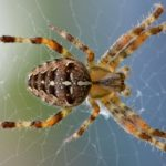 spin-web-nature-bug-51394