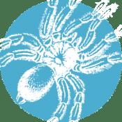 Quarterly Pest Control Service