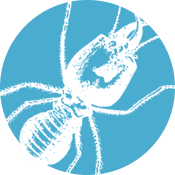 Sigma Termite Solutions