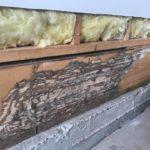 termites sigma pest control