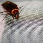 cockroach sigma pest control