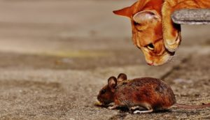 not afraid mouse